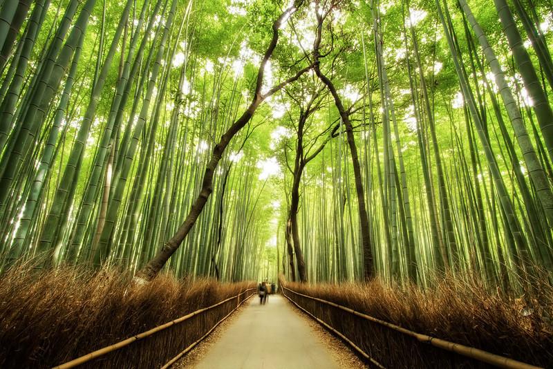 bamboolandscape