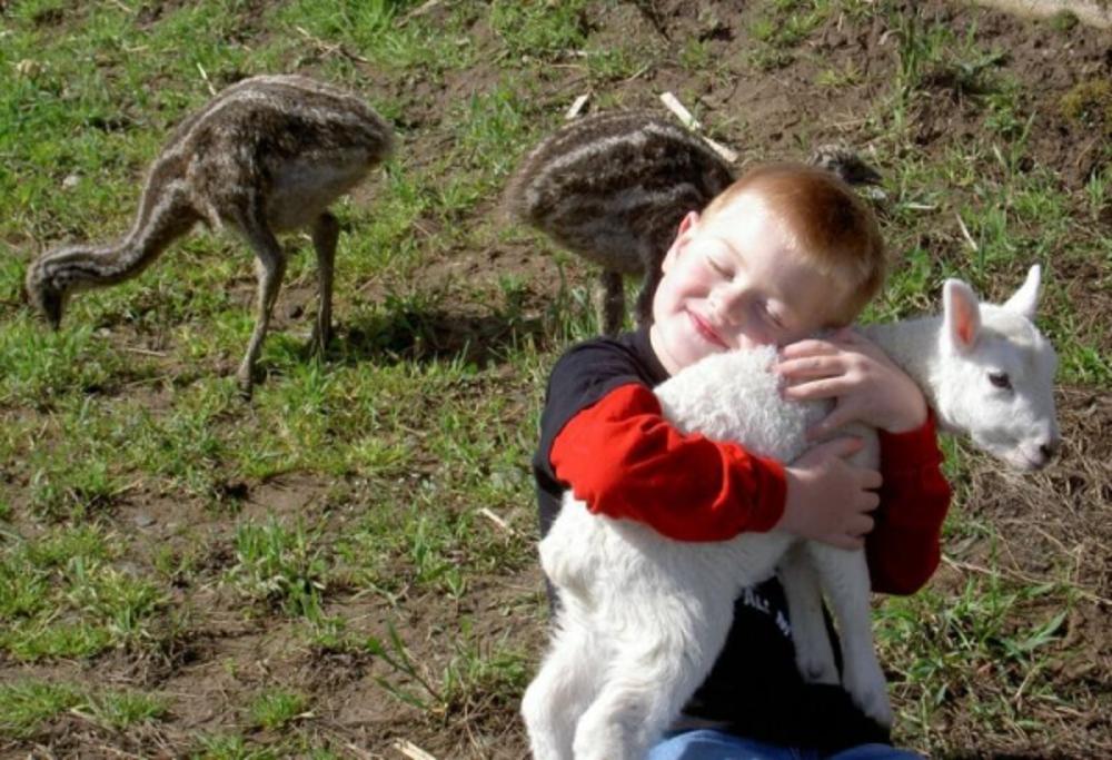 child&lamb