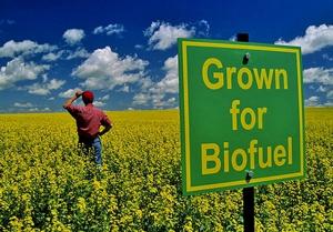 hemp_biofuel2