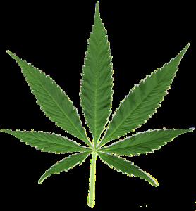 hemp_plant
